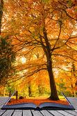 Creative concept idea of Beautiful Autumn Fall forest scene in p — Foto Stock
