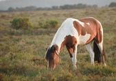 Beauttiful bliska koń kucyk new forest skąpane w słońcu — Zdjęcie stockowe