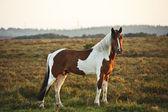 Bella imagen del bosque nuevo pony caballo iluminado por el sol naciente — Foto de Stock