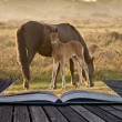 ������, ������: Creative concept image of ponies in magical book