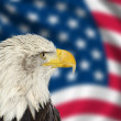 Portrait of American bald eagle against USA flag stars and strip — Stock Photo #7045630