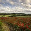 Poppy field in English countryside landscape — Stock Photo #7046070