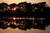 Setting sun glows through trees and reflected in still lake wate — Stock Photo