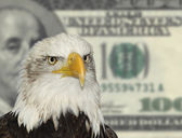 American symbol bald eagle against dollar currency background — Stock Photo