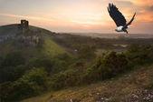 魔法の城の風景を飛行中のアフリカの魚ワシ — ストック写真