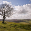 Single tree on hill against stunning vibrant blue sky and clouds — Stock Photo
