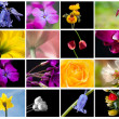 Bright colorful Spring flower storyboard collage — Stock Photo