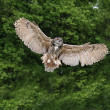Stunning European eagle owl in flight — Stock Photo #7087806
