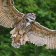 Stunning European eagle owl in flight — Stock Photo
