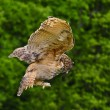 Stunning European eagle owl in flight — Stock Photo #7089389