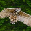 Stunning European eagle owl in flight — Stock Photo #7089904