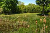 Campo de golf imagen mirando por encima de obstáculos de lily estanque hacia verde — Foto de Stock