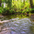 Low point of view along stream running through forest with deep — Stock Photo