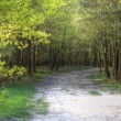 Path through fresh bright Spring woodland — Stock Photo