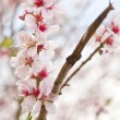Beautiful high key bright Spring blossom image — Stock Photo