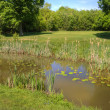Golf course image looking over lily pond obstacle towards green — Stock Photo