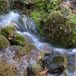 Beautiful close up of babbling brook in mountain forest — Stock Photo