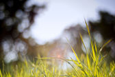 Spring nature background with grass blades and defocussed lights — Stock Photo