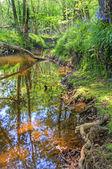 Niski punkt widzenia wzdłuż strumienia przez las — Zdjęcie stockowe