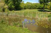 Imagem de golfe olhando por cima do obstáculo de lagoa do lírio para verde — Fotografia Stock