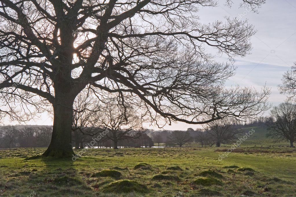 english countryside landscape old - photo #4