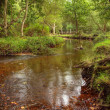 Beautiful lush forest scene with stream and touch of autumn colo - Stock Photo