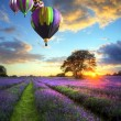 Hot air balloons flying over lavender landscape sunset - Foto Stock