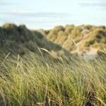 View across grassy sand dunes into sunset — Stock Photo