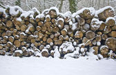 Beautiful winter forest snow scene — Stock Photo