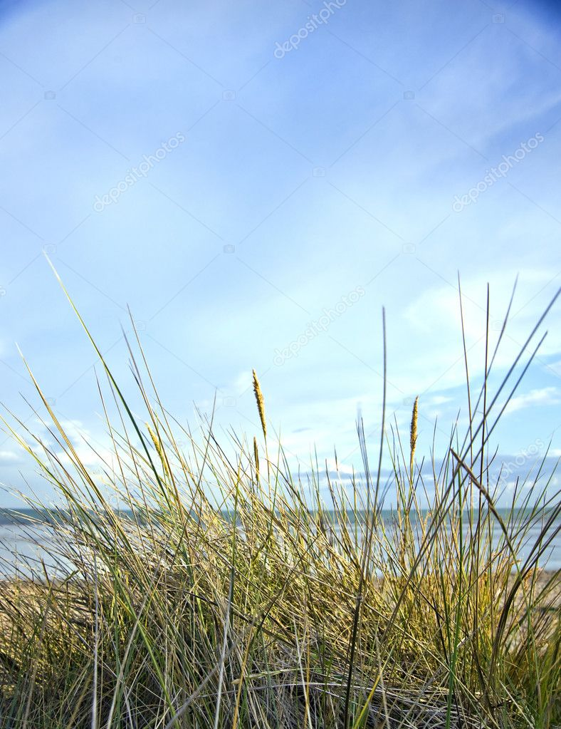 View across grassy sand dunes into sunset  Stock Photo #7129721