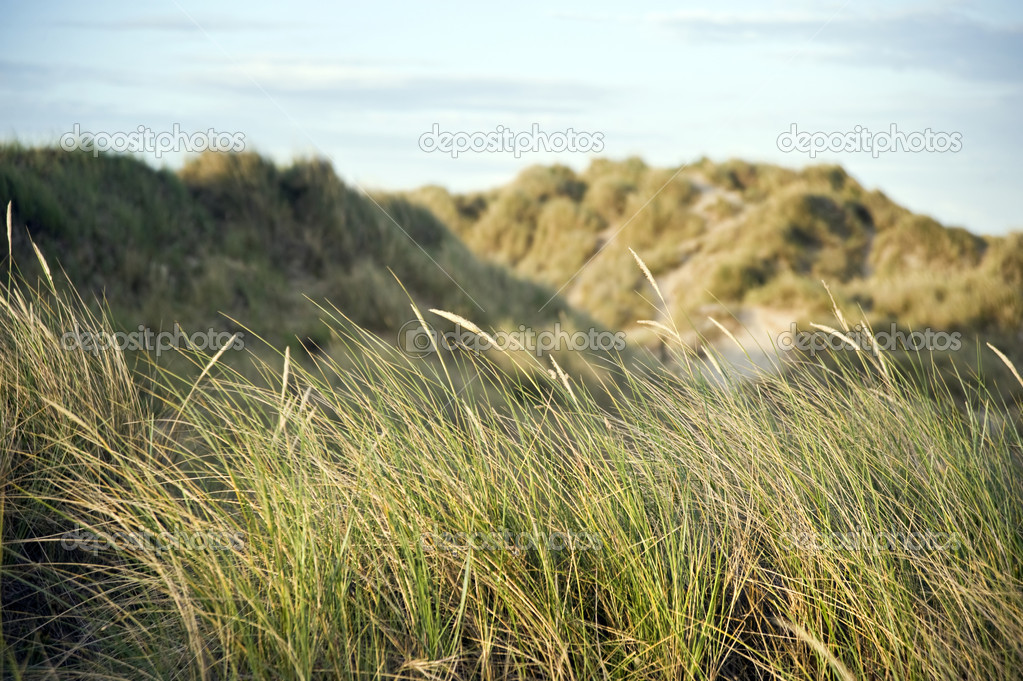 View across grassy sand dunes into sunset — Stock Photo #7129725