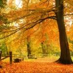 schöne Herbst Herbst-Wald-Szene — Stockfoto