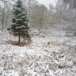 Lone Christmas tree sands out against snow covered forest floor — Stock Photo #7131073