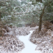Beautiful path through forest with snow on ground — Stock Photo