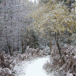 Beautiful path through forest with  snow on ground - Stock Photo