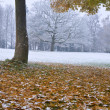 Beautiful image of Autumn Fall color tree in snow — Stock Photo