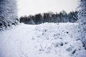 Vinter snö landskap i skogen — Stockfoto