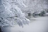 Branch over frozen lake in Winter snow — Stockfoto