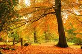 Beautiful Autumn Fall forest scene — Stock Photo