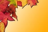Vibrant Autumn Fall Season leaves on faded gradient background — Stock Photo