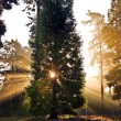Inspirational dawn sun burst through trees in forest Autumn Fall — Stock Photo
