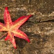 Autumn Fall leaf on grunge wooden rustic texture background — Stock Photo