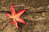 Autumn Fall leaf on grunge wooden rustic texture background — Stockfoto