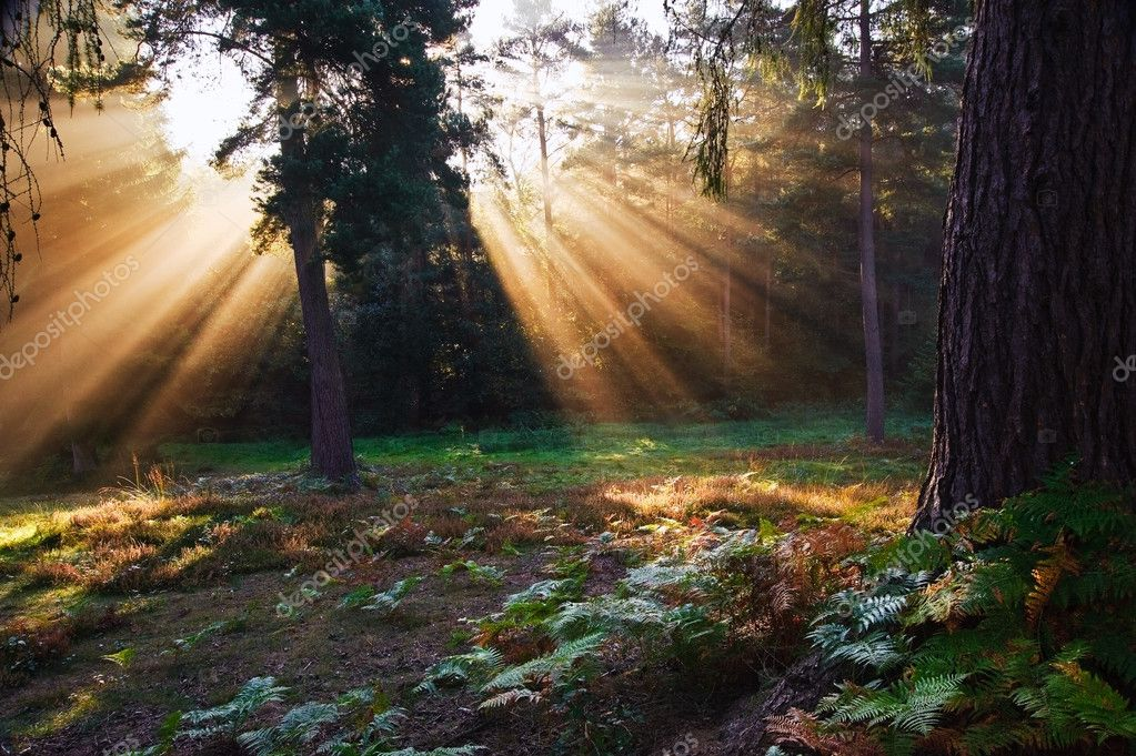 Motivational sunbeams through trees in Autumn Fall forest at sunrise — Stock Photo #7318598