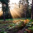 Inspirational dawn sun burst through trees in forest Autumn Fall — Stock Photo #7376986