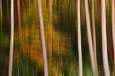 Long exposure blur effect Autumn Fall pine trees — Stock Photo