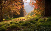 Landscape view through Autumn Fall forest into bright morning co — Stock Photo
