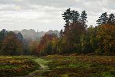 Paysage de la forêt belle automne chute vibrante — Photo