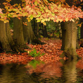 Beautiful Autumn Fall forest vibrant landscape reflected in wate — Stock Photo
