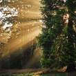 Stock Photo: Inspirational dawn sun burst through trees in forest Autumn Fall